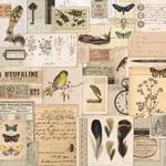 Ephermera Paper - Anthology - KaiserCraft