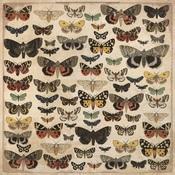Entomology Paper - Anthology - KaiserCraft