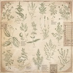 Herbs Paper - Anthology - KaiserCraft