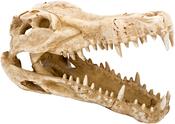 """Natural 9""""X4""""X5.5"""" - Penn-Plax Crocodile Skull Aquarium Ornament"""