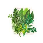 Leaf Embellishments - Evergreen - Prima