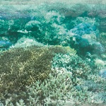 Sand Bar Paper - Deep Sea - KaiserCraft - PRE ORDER