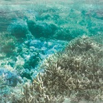 Barrier Reef Paper - Deep Sea - KaiserCraft - PRE ORDER