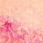 Be Brave Paper - Dragonfly - Elle & Viv