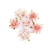 Big Sur Golden Coast Flowers - Prima