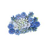 Marina Golden Coast Flowers - Prima
