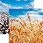 Wheat Paper - In The Field - Reminisce