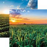 Corn Paper - In The Field - Reminisce