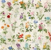 Arrangement Paper - Botanical Journal - Bo Bunny