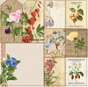 Packets Paper - Botanical Journal - Bo Bunny