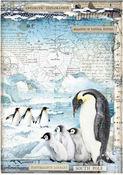 Penguins Rice Paper A4 - Arctic Antarctic - Stamperia
