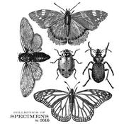 Specimen Cling Stamp 7 x 8.5 - Tim Holtz