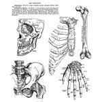 Anatomy Chart Cling Stamp 7 x 8.5 - Tim Holtz