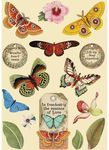 Butterfly Wooden Shapes - Amazonia - Stamperia - PRE ORDER