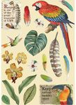 Parrot Wooden Shapes - Amazonia - Stamperia