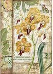 Orchid Rice Paper - Amazonia - Stamperia