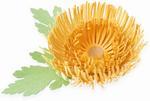 Chrysanthemum Thinlits Dies - Sizzix
