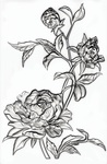 Mini Roses 3-D Embossing Folder by Tim Holtz