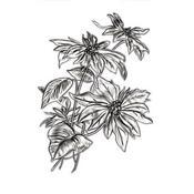Mini Poinsettia Texture Fades Embossing Folder by Tim Holtz - Sizzix