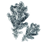 Oak Leaf 3D Impresslits Embossing Folder by Tim Holtz - Sizzix