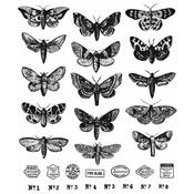 Moth Study Tim Holtz Cling Stamps - Stampers Anonymous